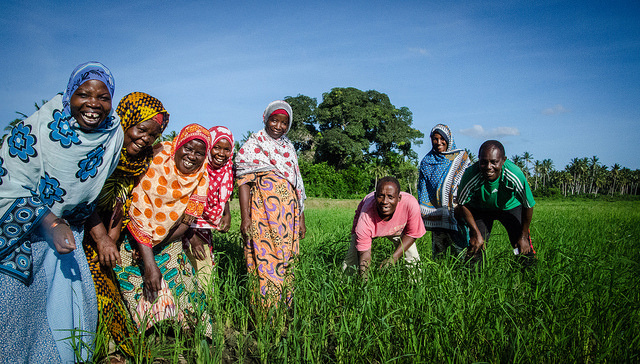 Tanzanian farmers with increased rice yields after planting improved seeds.
