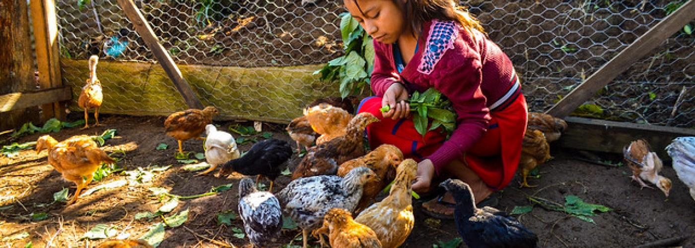 Photo: Youth girl in chicken pen. Photo by Ana Christina Chaclán García