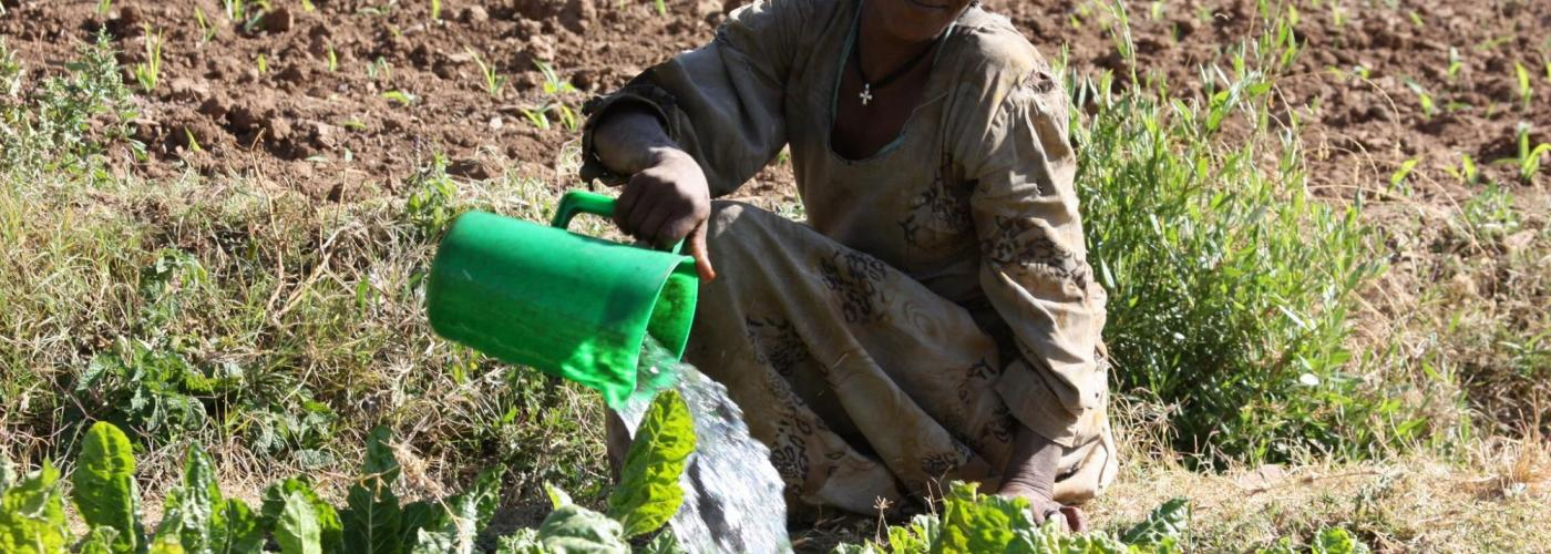 Photo: woman waters crops with green bucket