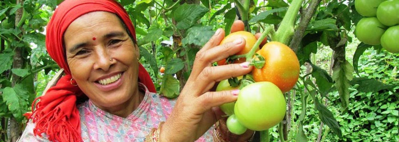 woman standing by tomato plant holding two tomatoes. woman is smiling and facing the camera