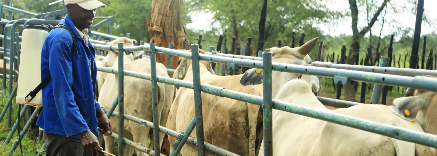 good livestock management