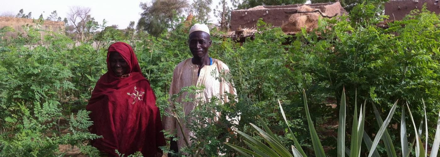 Two farmers stand in the middle of their moringa farm in front of their home.