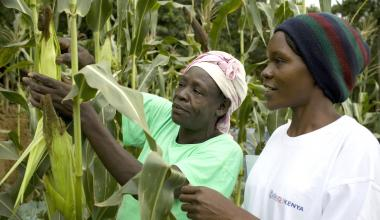 Two smallholder farmers in Western Kenya tend to corn.