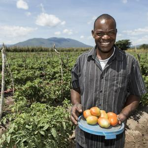 Photo: male farmer holding tomatoes standing in field. Credit: USAID/Tanzania