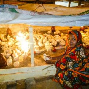 Morzina Begum tends to her chicks on her two decimal poultry farm.