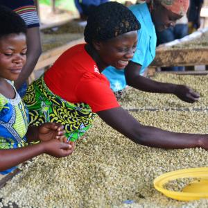 Photo: Group of people drying coffee.  Photo credit: Feed the Future