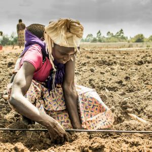 Photo: A woman works in the fields. Photo Credit: Fintrac Inc