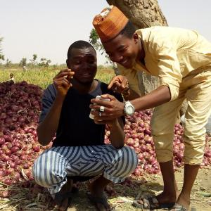 Photo: Two farmers, Abdulhalim Onimisi and Isah Munkaila in their farm at Ungogo town of Kano State in Nigeria using a mobile app. Photo Credit: Imran Abdullahi