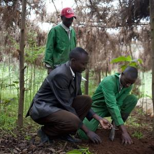 Photo: Group of Kenyan youth in Mariaini Village of Kiambu County engaging in farming activities.