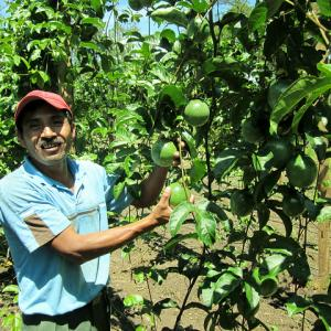 Farmer in Honduras growing passion fruit. Photo by Hector Santos.