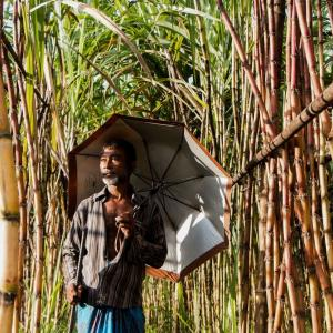 Man in Bangladesh next to bamboo tree.
