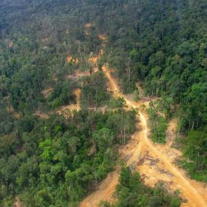 Photo: Road Construction and Logging Impacts in East Kalimantan, Indonesia. Photo Credit: Aidenvironment.