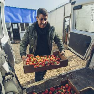 Hussein Ahmad Qararya is a strawberry vendor in West Bank. Photo By Bobby Neptune for USAID.