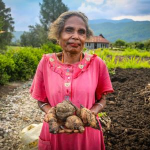 Photo: A woman in Fatumnasi holding her harvest, casava. Photo Credit: Aris Sanjaya/CIFOR