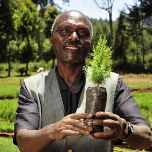 Photo: man in Mount Kenya region holding small tree to plant.