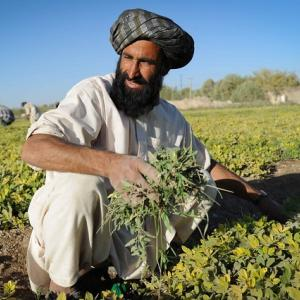 Photo: Muhammed Nur, a farmer and teacher at the Helmand Agriculture High School in Afghanistan. Photo Credit: David Gill/Development Pictures.