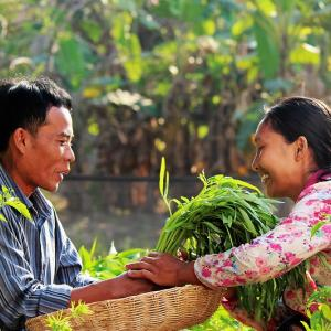 Photo: Farmers harvest morning glory together from their nutrient-rich home garden in Cambodia.