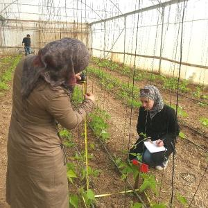 Two women in Jordan measuring plant growth at Jaber's Farms