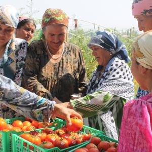 These women from Khatlon province, Tajikistan excitedly admire tomatoes they just collected from their greenhouses. USAID Family Farming Program helped construct ten sets of greenhouses in four districts of Khatlon province. 420 people, primarily landless households, benefited from the greenhouses. The greenhouse program produced 59 metric tons of early tomatoes, of which 44 metric tons were sold at market and 15 metric tons were consumed or stored for winter use by the individual greenhouse owners. Greenho
