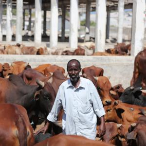 A man in front of his livestock herd.