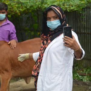 A man and woman in masks stand beside livestock while using a vet app