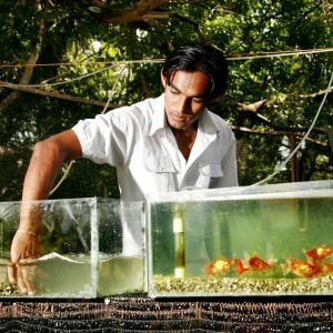 Photo: Ornamental fish grower in Sri Lanka